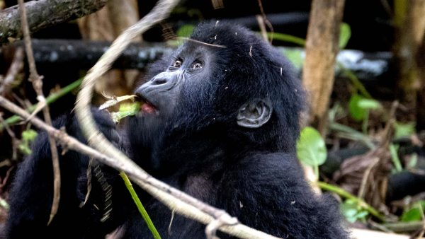 14 DAYS UGANDA ADVENTURE & PRIMATES