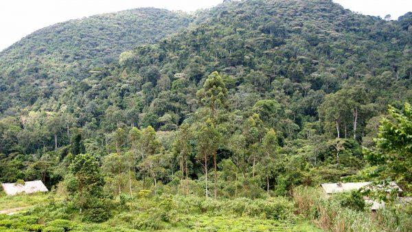 3 DAYS- BWINDI IMPENETRABLE NATIONAL PARK